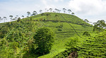Take an excursion to the slopes of Mount Lawu