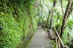 Down the hill to Jumog waterfall